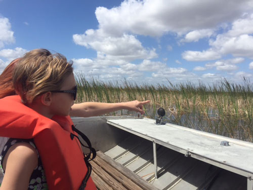An airboat ride through the Everglades