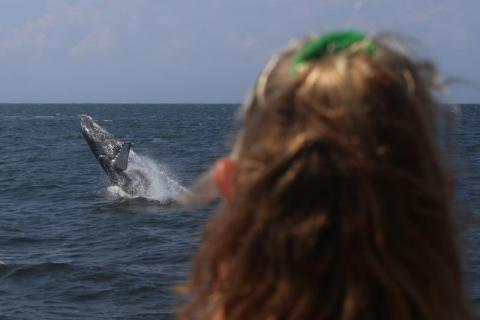 Whale watching from NYC! -