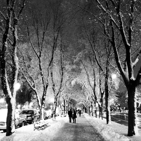 crown heights snow trees promenade