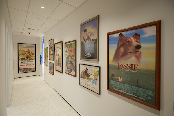Museum of the Dog movie posters room