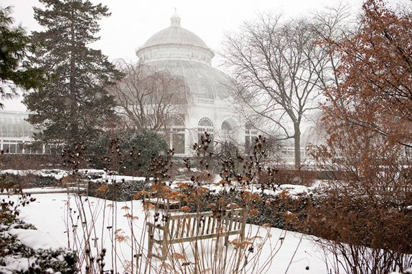 winter at the new york botanic garden