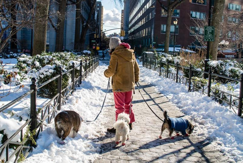 snow dog walk union square