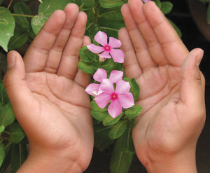 hands holding small pink flowers