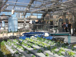 rooftop greenhouse classroom at Manhattan School for Children
