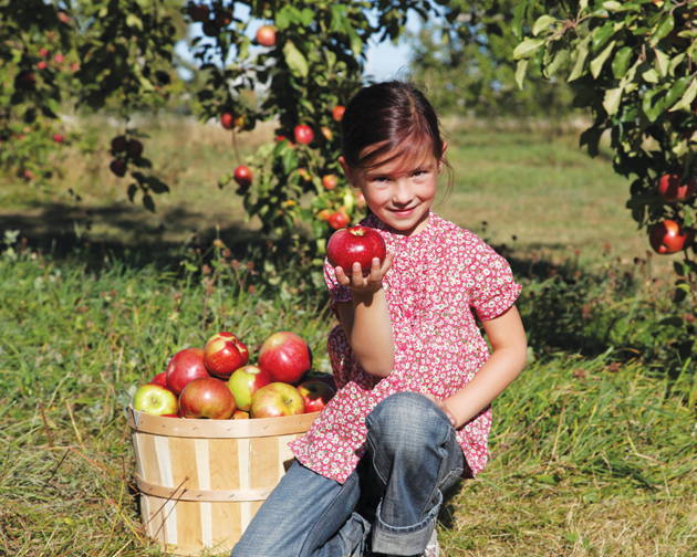 girl-picking-apples