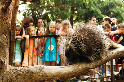 porcupine; queens zoo
