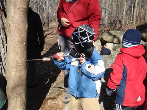 kids getting syrup from tree; children maple sugaring; new canaan nature center