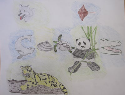 Doodle 4 Google - to save the endangered animals by Sara McKiernan
