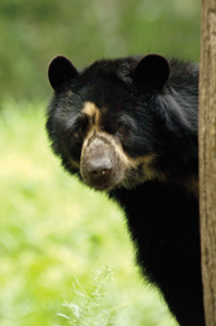black bear at Queens Zoo