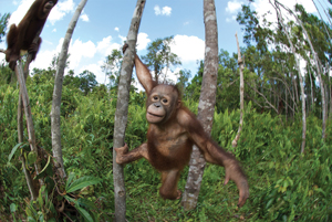 """Born to Be Wild"" documentary; monkey in the trees"