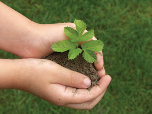 hands holding small plant in soil