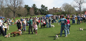 Long Island Dog Games, Demonstrations, and Exhibits