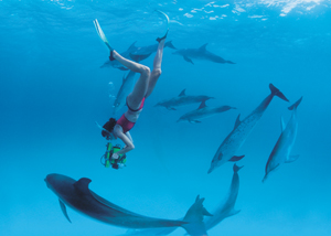"""Dolphins"" documentary; Dr. Kathleen Dudzinski swimming with dolphins"