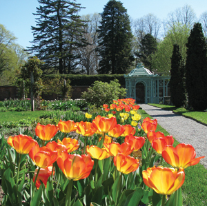 tulips at Old Westbury Gardens