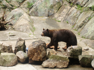 Bear Mountain State Park Zoo