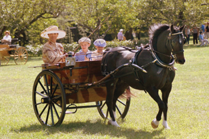 Horse & Carriage Day at Boscobel Gardens
