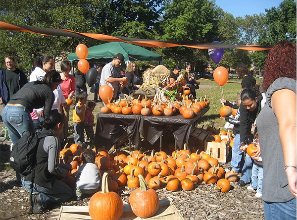 pumpkin day at mccarren park
