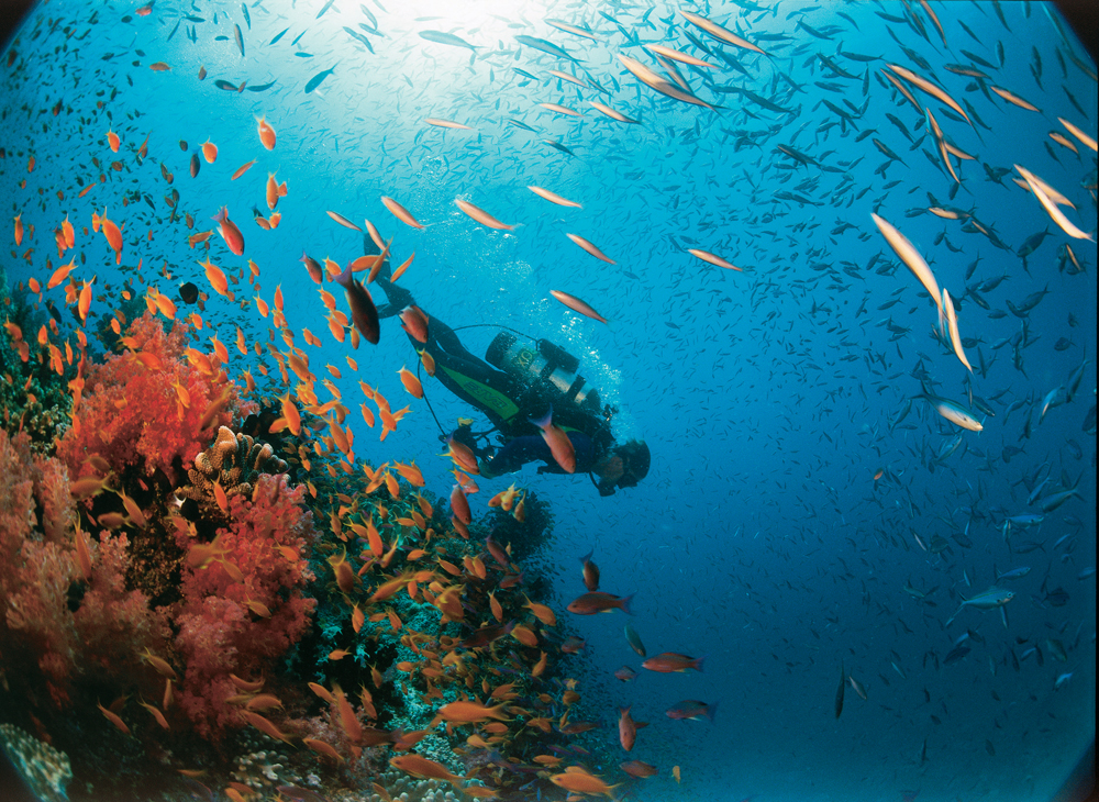 Coral Reef Adventure under the sea