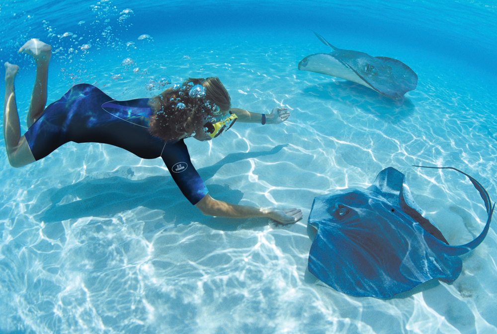 snorkeling with stingrays