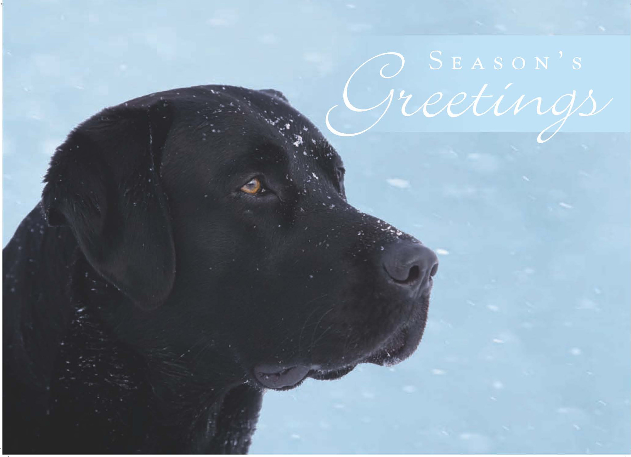 Guiding Eyes For The Blind Holiday Card