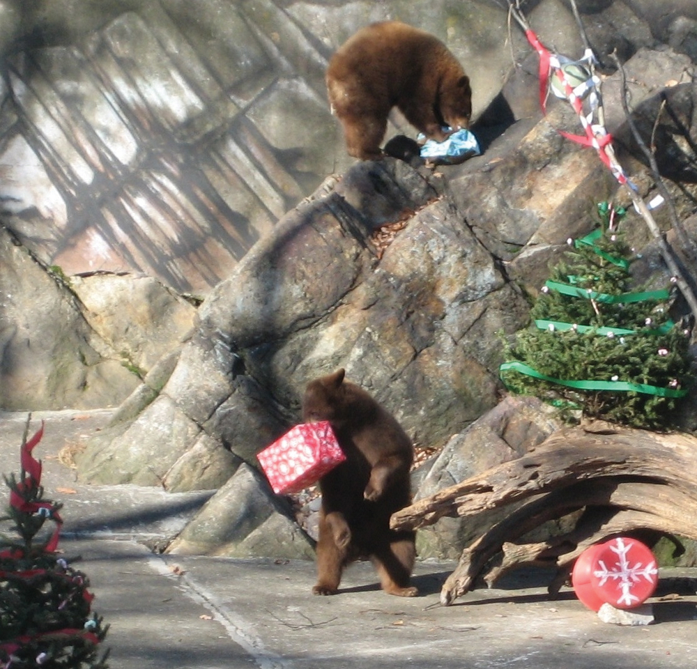 Bear Mountain Zoo Beary Merry Holiday