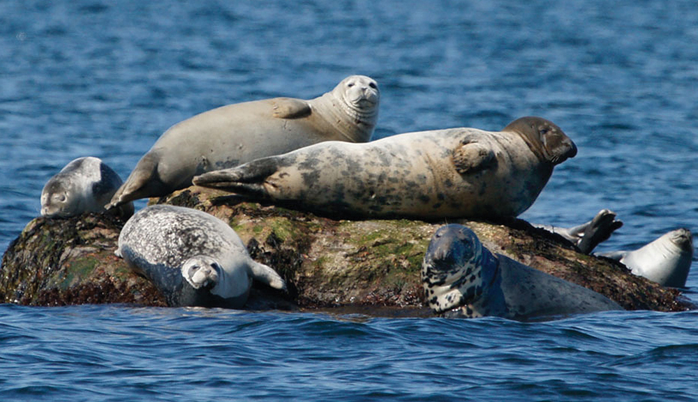 seals on the long island sound