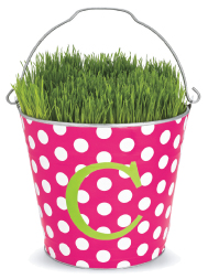 chasing fireflies grow your own grass bucket