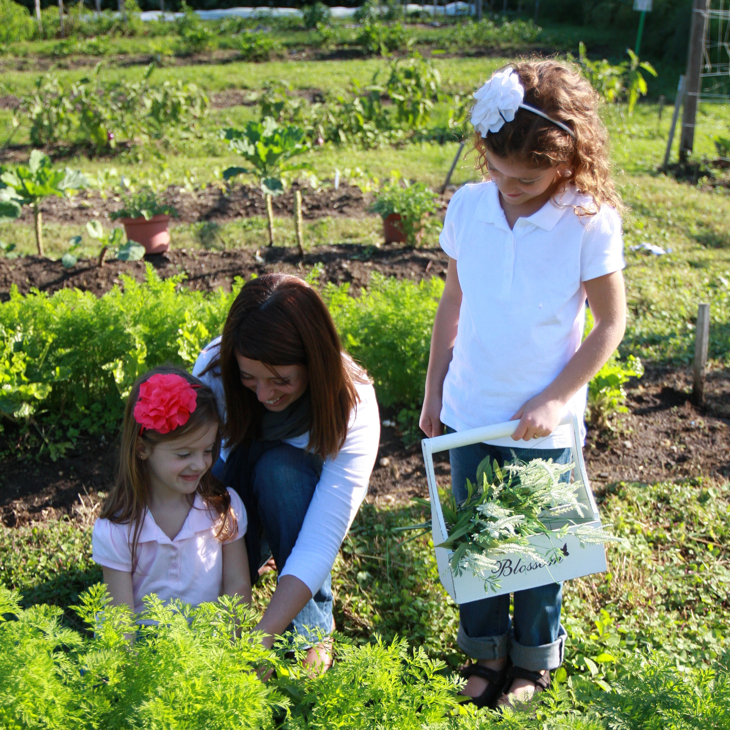 Culinary Therapy founder Lisa Gatti picks carrots with her daughters in their vegetable garden.