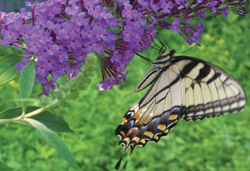 Butterfly Exhibit at Bergen County Zoo