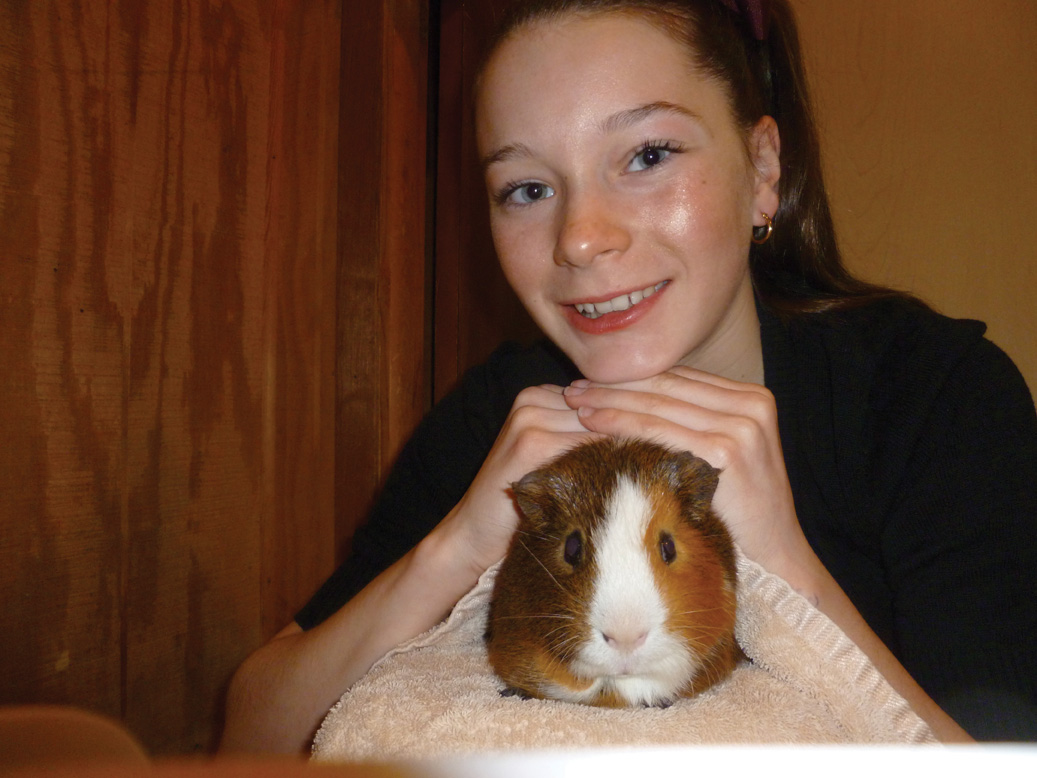 Giggles the pet guinea pig