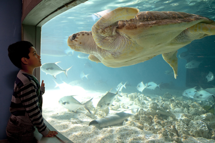 sea turtle in aquarium