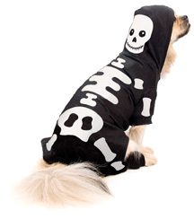 dog in skeleton costume