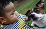 pet safety with kids