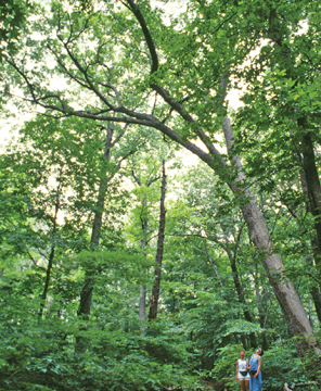forest at new york botanical garden