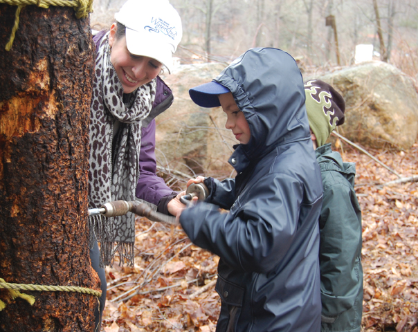 maple sugaring in stamford ct
