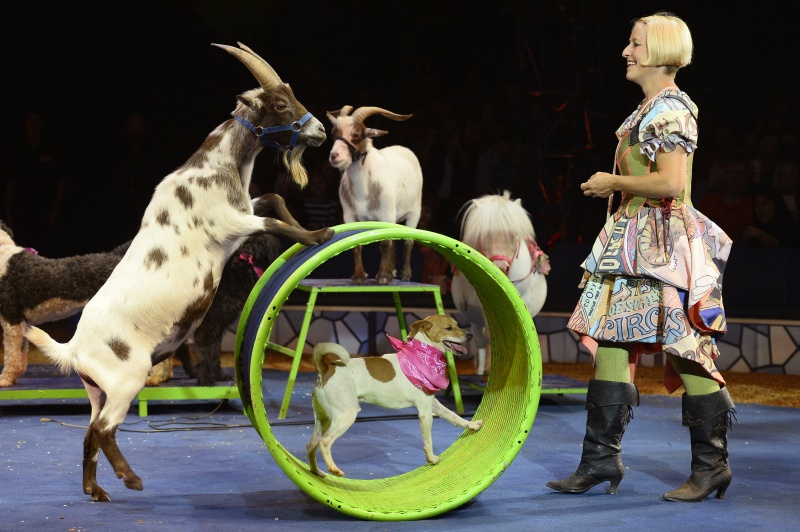 jenny vidbel of big apple circus