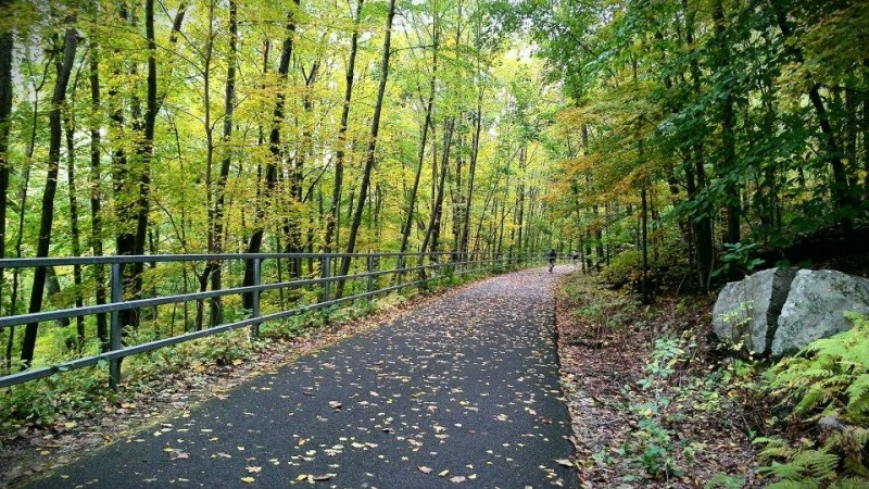 paved trail in woods