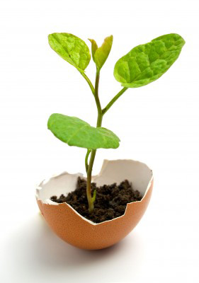 plant growing in eggshell