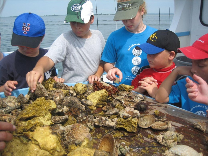 campers examining oysters