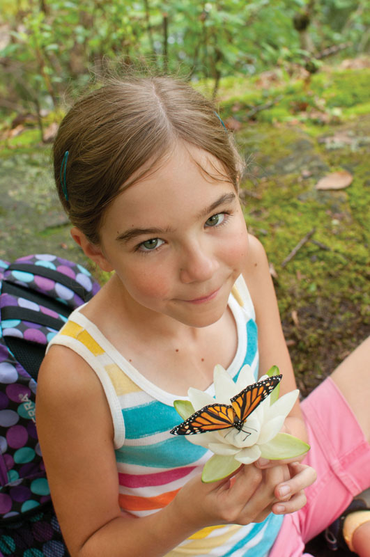 north american butterfly count