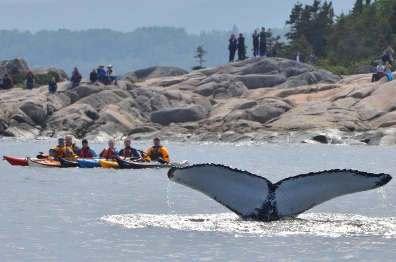 whale watching kayak tour in quebec