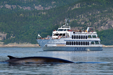 whale watching cruise in quebec