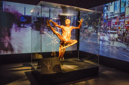 Body World Pulse at Discovery Times Square in NYC