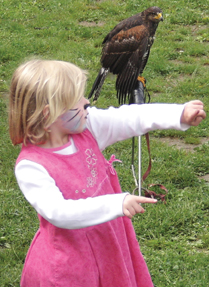 hawk festival greenwich ct
