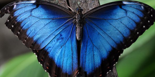 Butterfly Conservatory Returns to the American Museum of Natural History