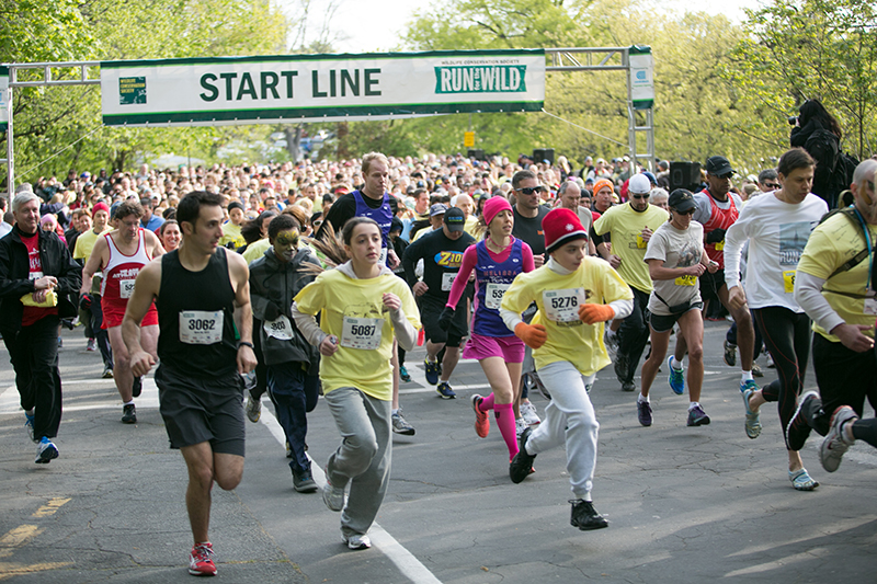 run for the wild at bronx zoo