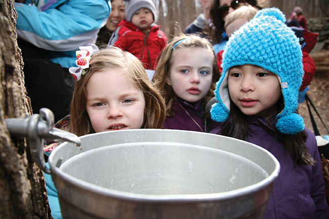 kids maple sugaring