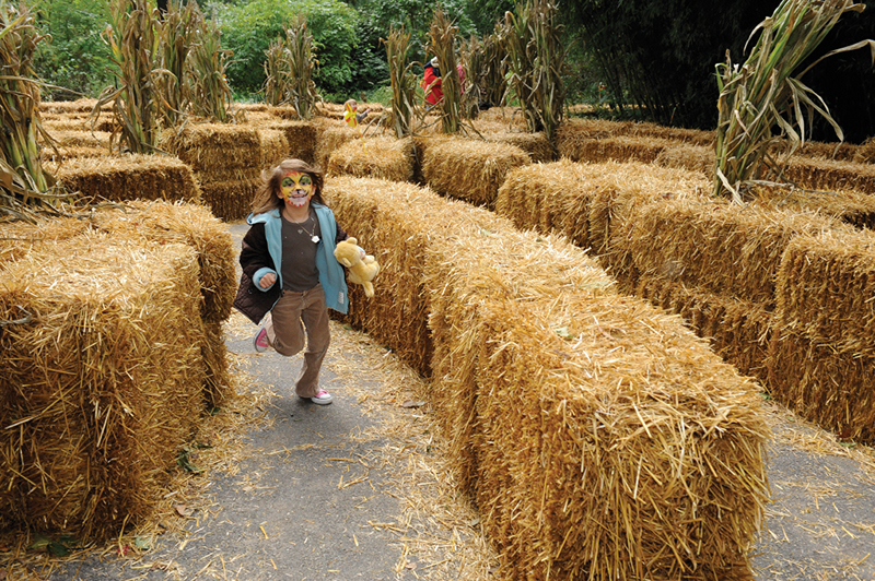 bronx zoo hay maze at boo at the zoo