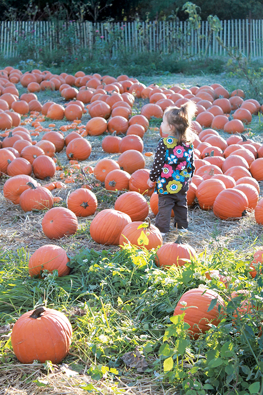 pumpkin patch at queens county farm museum