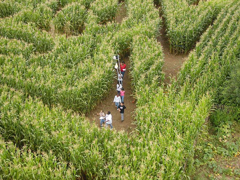 queens amazing maize maze